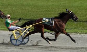 Американська стандартбредная кінь - сама жвава на планеті