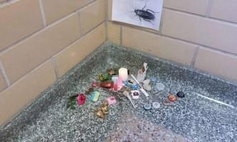 Американські студенти урочисто поховали таргана