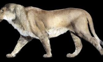 Американський лев