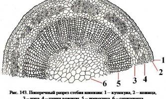 Анатомічна будова стебла конопель