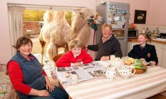 Англієць обміняв свій автомобіль на верблюда
