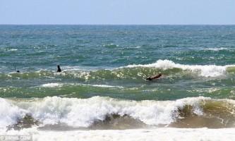 Англійські рятувальники дістали з океану бика
