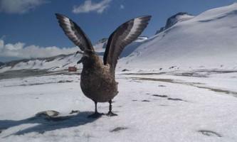 Антарктичні птиці навчилися розрізняти людей