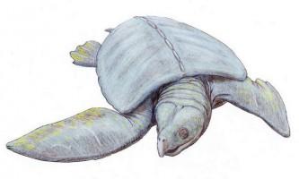 Архелон - черепаха неймовірних розмірів