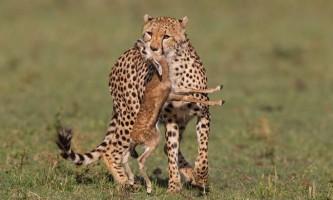 Арт: механічний гепард