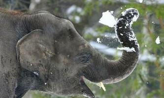 Конкурс краси серед слонів в непалі