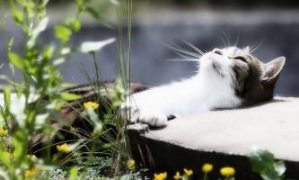 Авітаміноз у кішок: симптоми і лікування