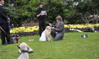 Австралієць одружився зі своїм собакою