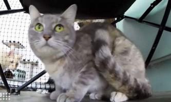 Австралійська кішка поставила своєрідний рекорд перебування в «одиночці»