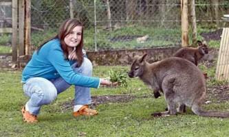 Австралійські поліцейські зловили кенгуру на стоянці аеропорту