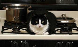 Австрійська кішка влаштувала пожежу в квартирі