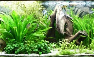 Азбука догляду за акваріумними рибками