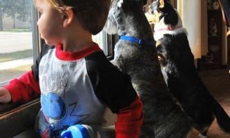 Бактерія, здатна позбавити людину від алергії і астми, виявлена у домашніх тварин