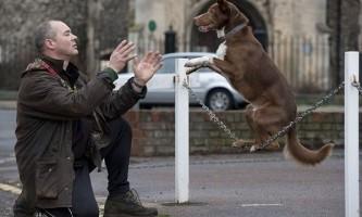 Балансуючий пес оззи