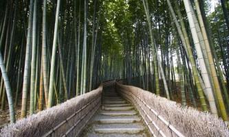 Бамбуковий гай в передмісті кіото, японія