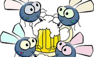 Бельгійці пояснили потяг мух і людини до пива