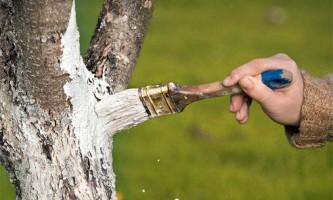 Білити дерева - як, коли і навіщо (побілка дерев навесні і восени відео)