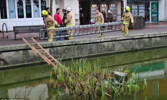 Три пожежні команди рятували білку, що потрапила у водойму