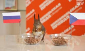 Білка масик і інші звірятка будуть вгадувати переможців футбольних матчів євро-2012
