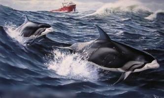 Беломордий дельфін - кит, який супроводжує морські судна
