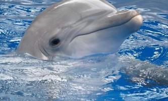 Білий дельфін або тукуші - ендемік амазонки