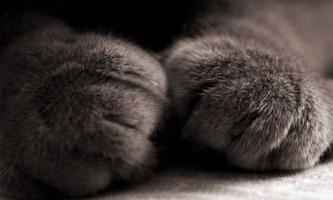 Симптоми сечокам`яної хвороби у кота і кішки