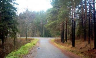 Березинський заповідник: білоруська природа у всій красі