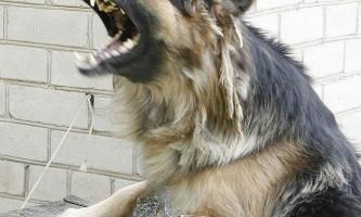 Скажений собака покусав жінку і її 7-річного сина