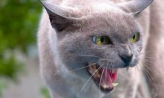 Сказ у кішок