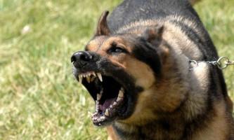 Сказ у собак: в чому небезпека захворювання?