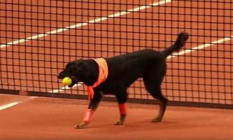 Бездомних собак змусили підносити м`ячі на чемпіонаті з тенісу