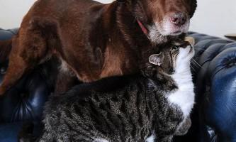 Бездомний кіт взяв на себе турботу про сліпого пса