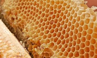«Божевільний мед» гімалайських бджіл