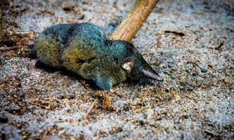 Біологи знайшли тварину з найміцнішим хребтом