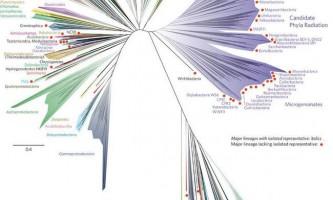 Біологи представили нове «древо життя»