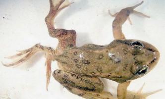 Біорізноманіття допомагає боротися з паразитами