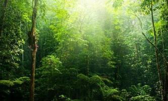 Біорізноманіття тропічних лісів скоротиться наполовину до 2100 року