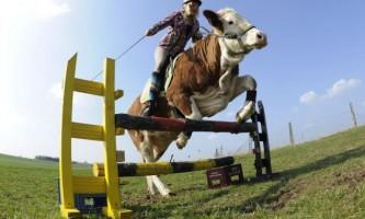 Корова з душею коні
