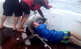 Битва за найбільшого блакитного тунця в світі