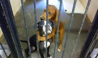 Блогери врятували від усипляння обнімаються собак