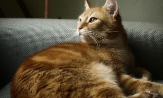Хвороби кішок: симптоми і лікування