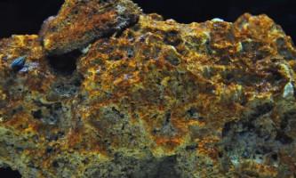 Боротьба з бурими водоростями в акваріумі