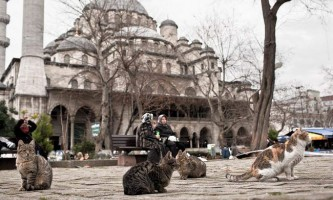 Босфорські коти
