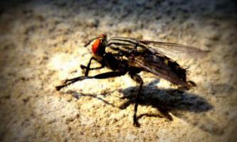 Брейк-данс у виконанні мухи підірвав інтернет