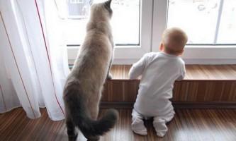 Британські кішки і новонароджені діти