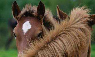 Британські студенти зможуть стати бакалаврами з психології коня