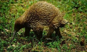 Британські вчені склали список з 100 тварин, що знаходяться на межі вимирання