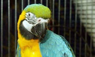 Британські ввс виплатили компенсацію за смерть папуги