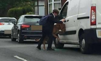 Британський школяр врятував собаку від удушення на власному повідку