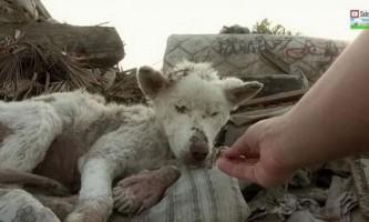 Бродячий пес зі звалища стала розкішним псом